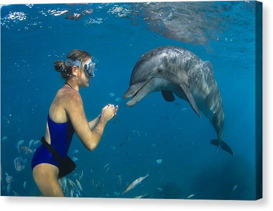 Bottlenose Dolphins Canvas Print - Bottlenose Dolphin And Swimmer by Alexis Rosenfeld