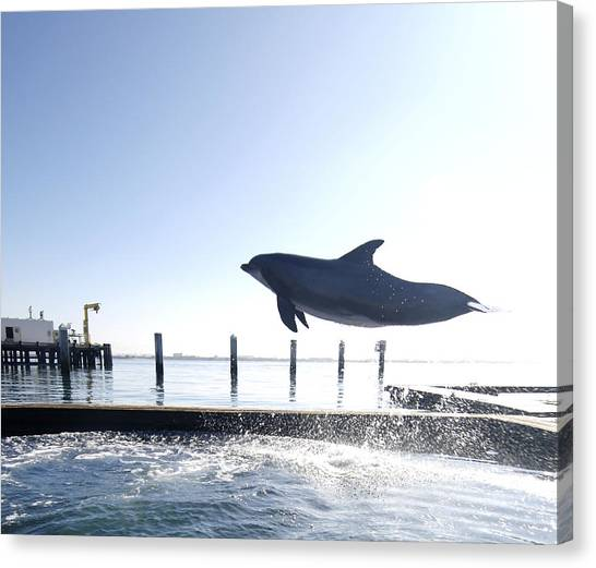Bottlenose Dolphins Canvas Print - Bottlenose Dolphin Jumping Out Of Water by Louise Murray