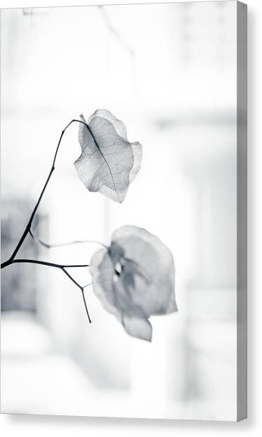 Bougainvillea - High-key Lighting Canvas Print