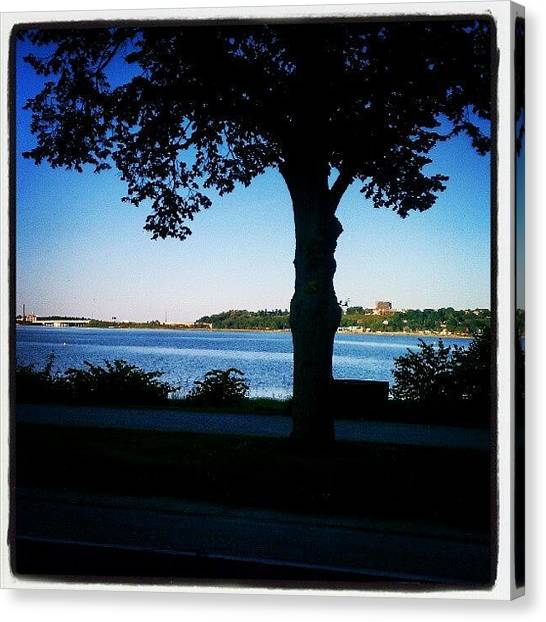 Maine Canvas Print - Boulevard Tree 614 by Chris T Darling