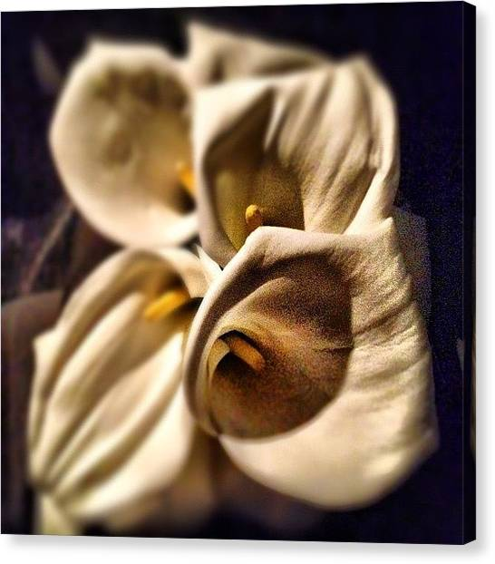 Presents Canvas Print - Bouquet by Jane Bulatnikova
