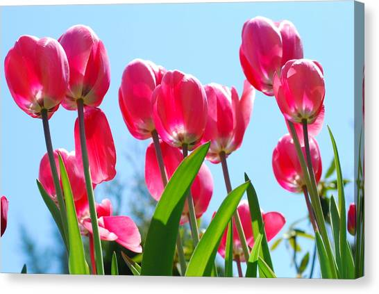 Bouquet Of Tulips Canvas Print