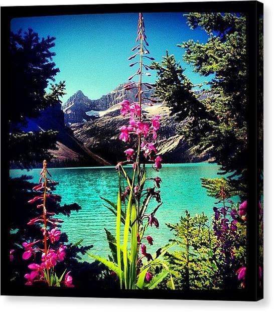 Glacier National Park Canvas Print - #bow #summit #lake #glacier #mountains by Jamie Caskenette
