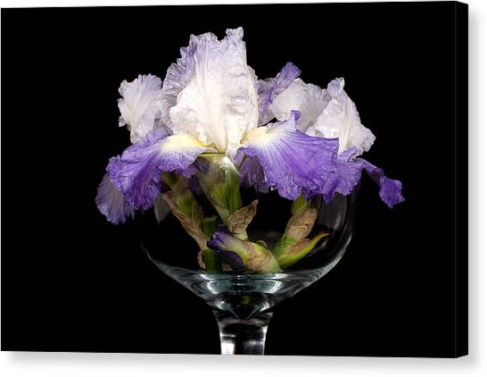 Bowl Of Iris Canvas Print by Trudy Wilkerson