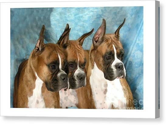 Boxer 655 Canvas Print by Larry Matthews