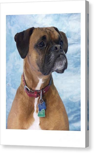 Boxer 950 Canvas Print by Larry Matthews