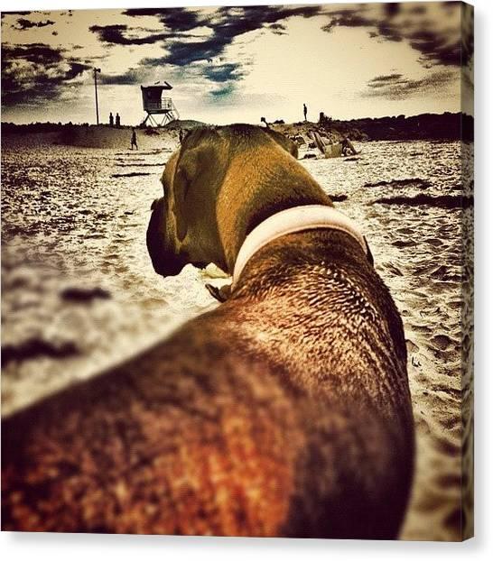 Lifeguard Canvas Print - #boxer #boxerdog #boxergram #dog #pet by Eva Martinez
