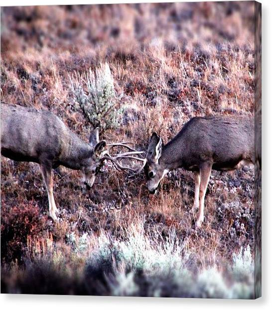 Wyoming Canvas Print - Boys Will Be Boys by Lisa King