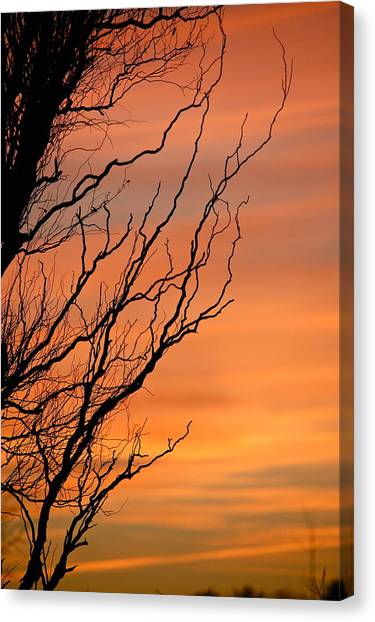 Branches Meandering Through The Sunset Canvas Print