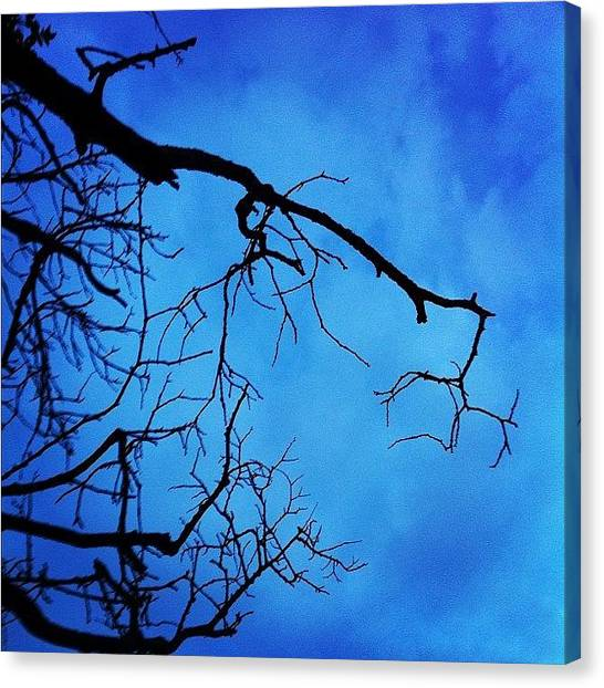 Berries Canvas Print - #branches #tree #evening #nature #scary by Christine Cherry