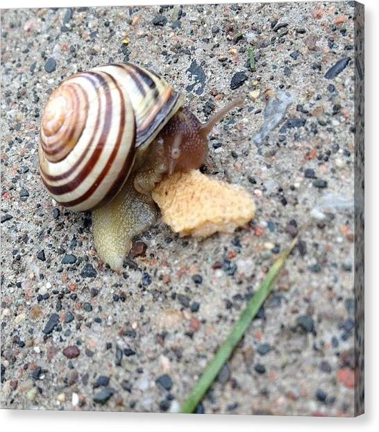 Ontario Canvas Print - Breakfast Time For # Snail by Katrina A