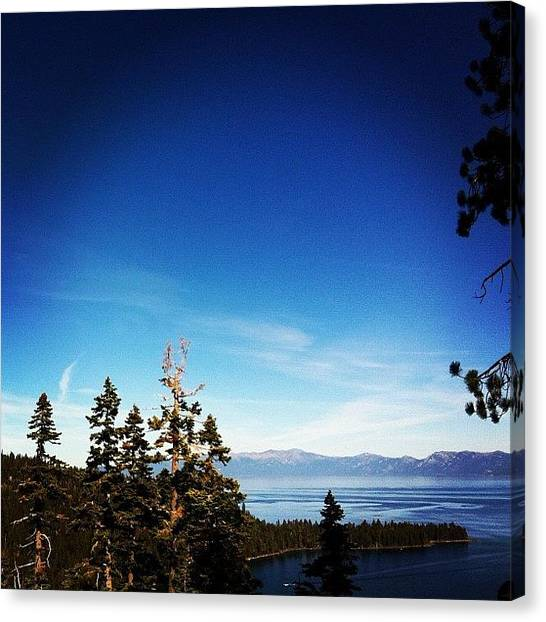 Irises Canvas Print - Breathe! #hiking #tahoe #nature by Iris  Malang