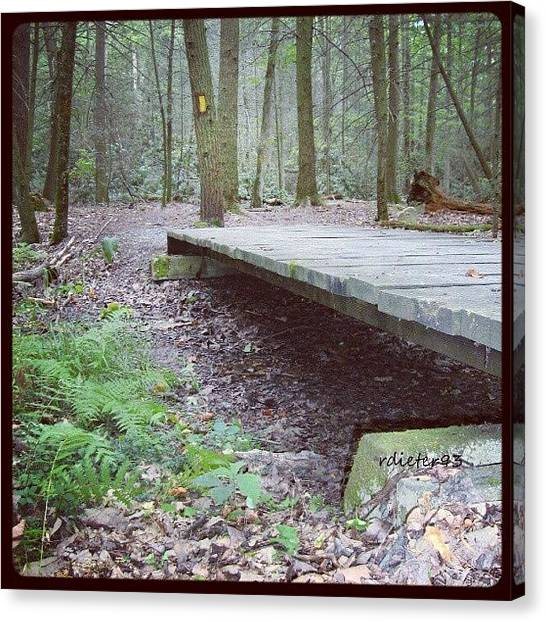 Forest Paths Canvas Print - #bridge #woods #trees #trail #path by Ryan Dieter
