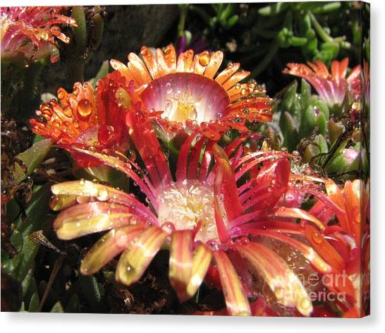 Bright And Beautiful Canvas Print
