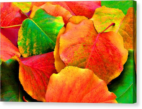 Bright Beautiful Fall Leaves Canvas Print