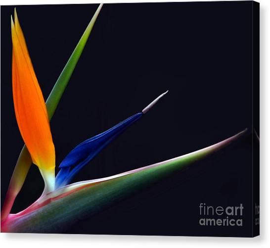 Bright Bird Of Paradise Rectangle Frame Canvas Print