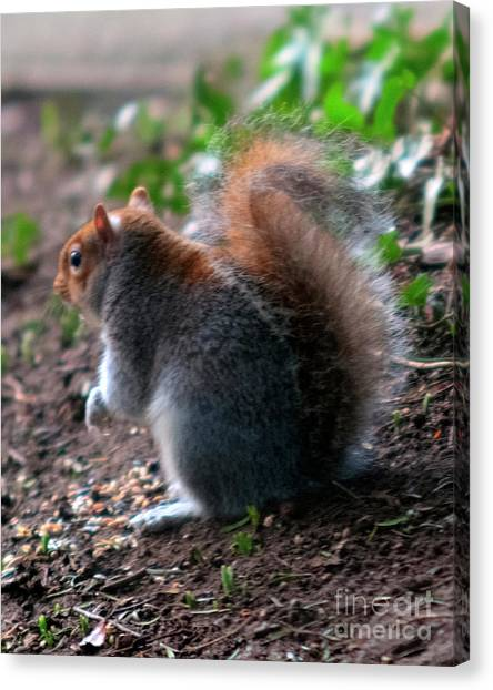 Bright Eyed And Bushy Tailed Canvas Print