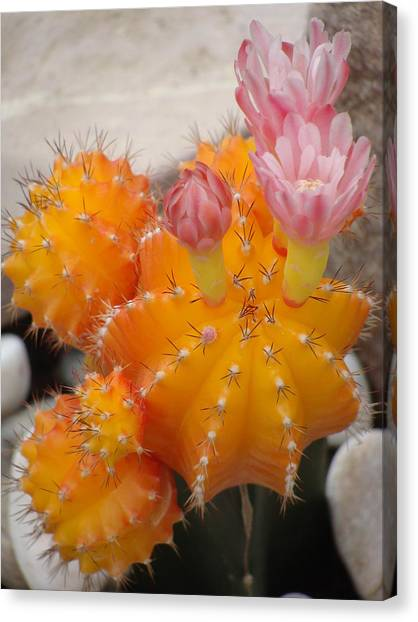 Bright Orange Cactus Canvas Print by Emma Manners