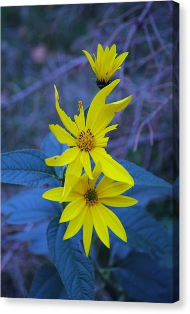 Broken Petals Canvas Print
