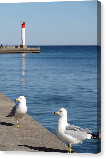 Bronte Lighthouse Gulls Canvas Print