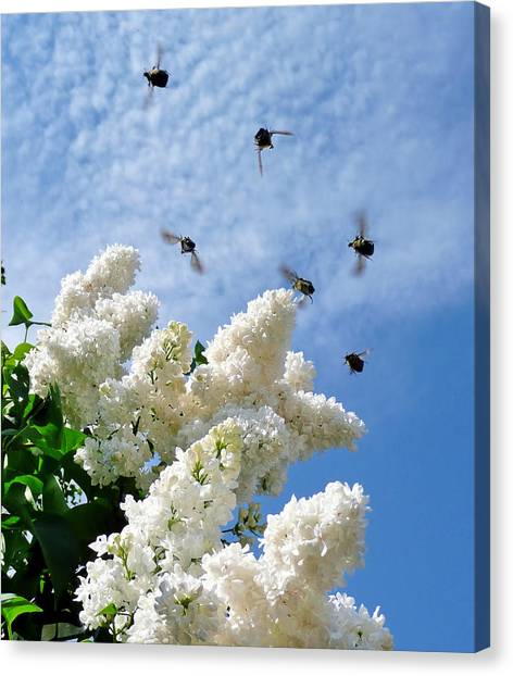 Bronze Bugs Fly In The Blue Sky Canvas Print