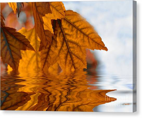 Bronze Reflections In Autumn Canvas Print