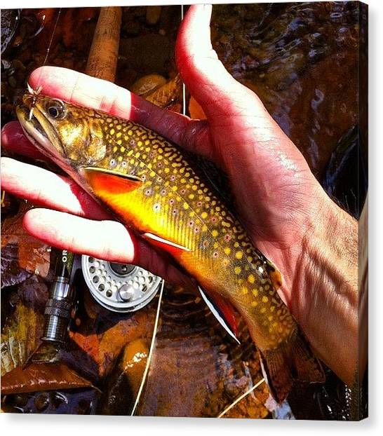 Fly Fishing Canvas Print - Brook Trout Fall Colors by Dave M