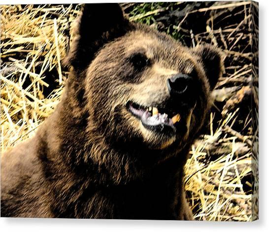 Brown Bear Smiling Canvas Print by Derek Swift