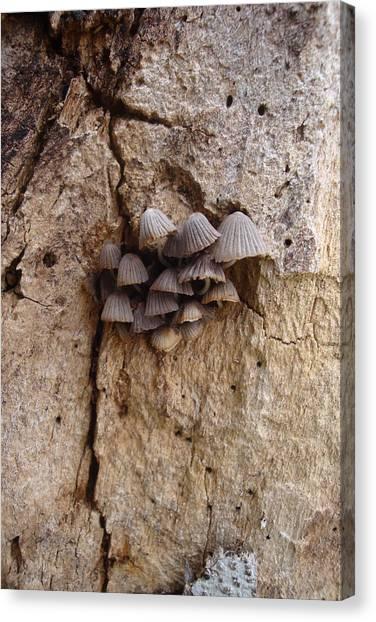 Brown Mini Mushrooms Canvas Print by Koral Garcia