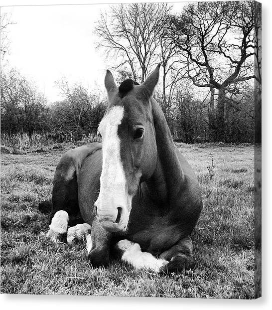 Hunting Canvas Print - Bubba :* #geldings #horseeyeviewcontest by Caitlin Hay