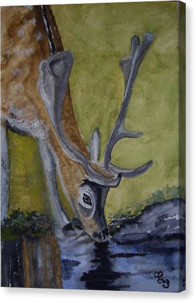 Buck At Bushy Park Canvas Print