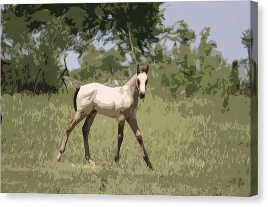 Buckskin Pony Canvas Print