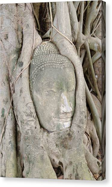 Buddha Head In A Tree Canvas Print by Kanoksak Detboon