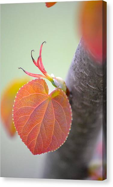Budding Heart Canvas Print