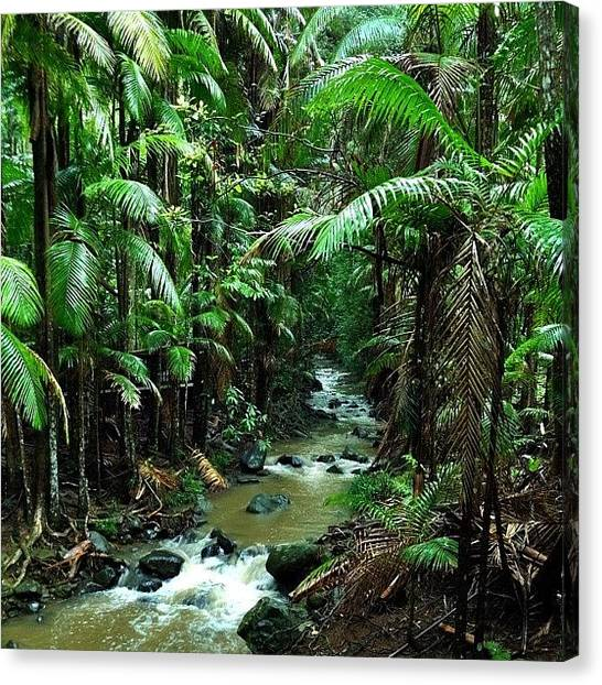 Rainforests Canvas Print - Buderim Forest Park : 02/06/2012 by Tony Keim