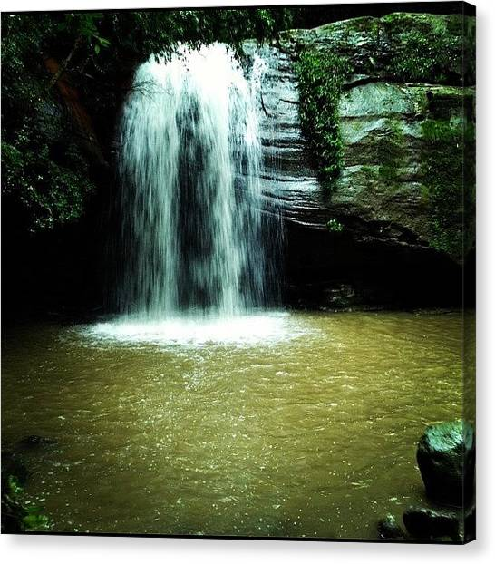 Jungles Canvas Print - Buderim Forest Park 02/06/2012 #qld by Tony Keim