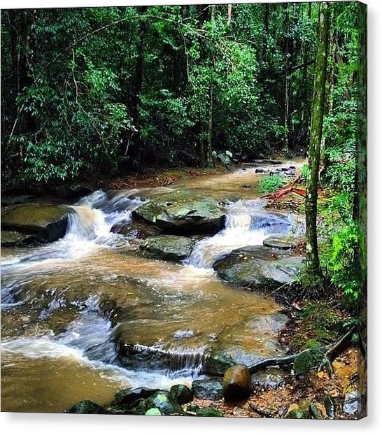 Jungles Canvas Print - Buderim Forest Park 02/06/2012 by Tony Keim