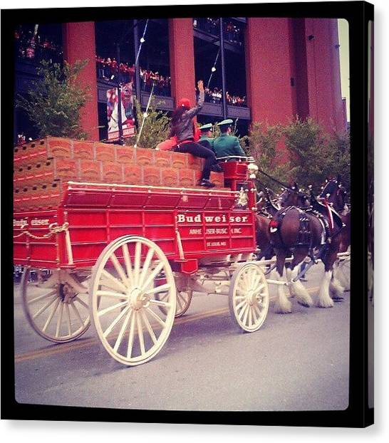 Saints Canvas Print - Budweiser Clydesdales by Anna Beasley