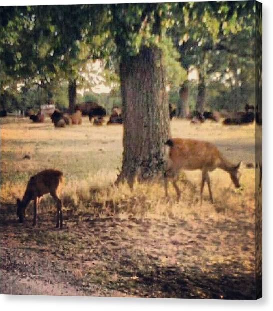 Outer Space Canvas Print - Buffalo And White Tale Deer #nature by Alien Alice
