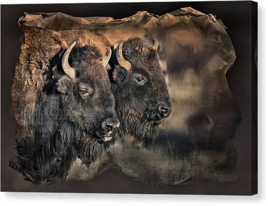 Buffalo Head Canvas Print