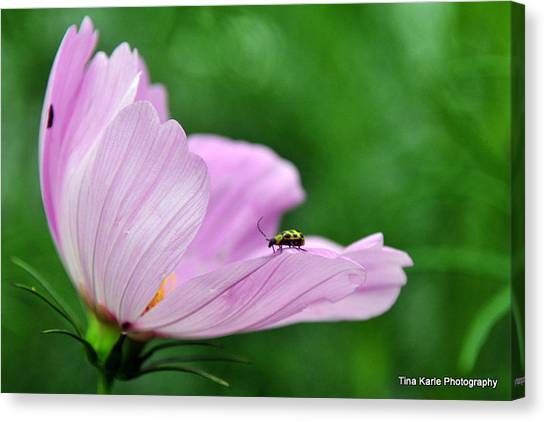Bug On Flower Tip Canvas Print by Tina Karle