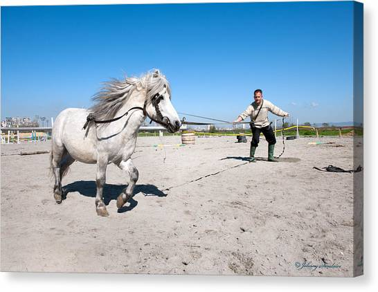 Bulgaria Horse Canvas Print