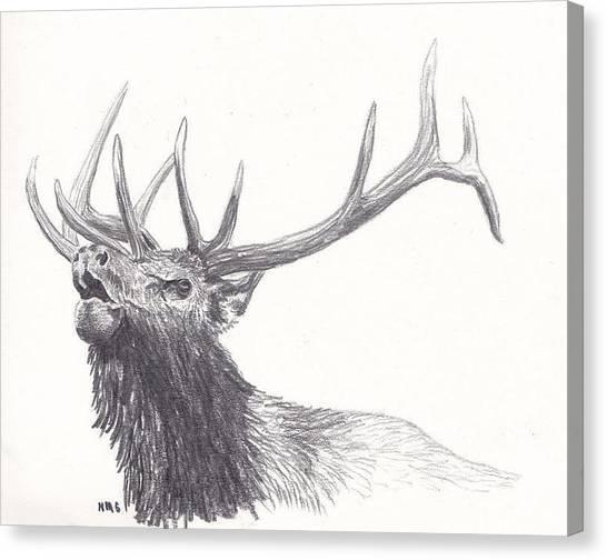 Bull Elk Canvas Print by Nicole Grattan