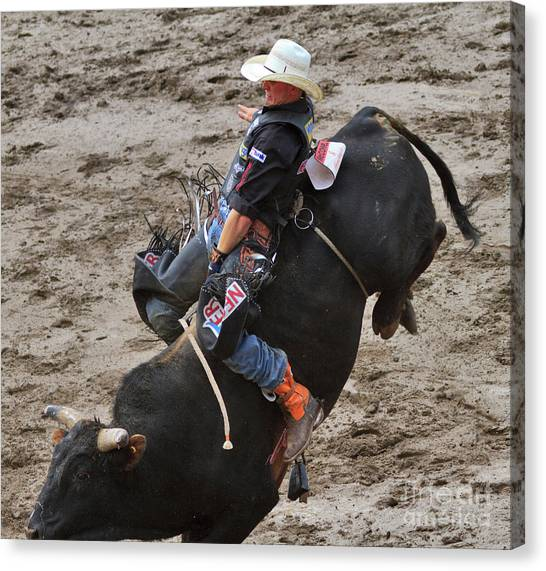 Bull Riding Canvas Print - Bull Riding by Louise Heusinkveld