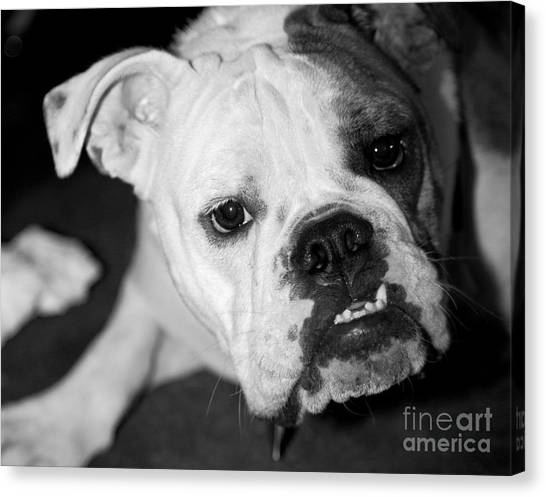 French Bull Dogs Canvas Print - Bully by Leslie Leda