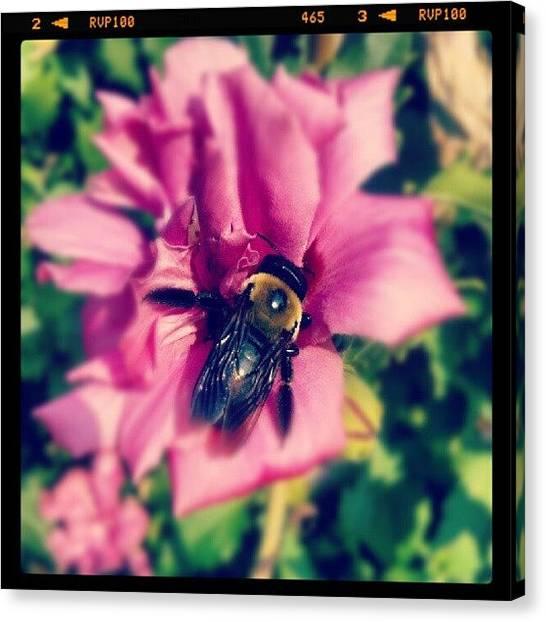 Gardens Canvas Print - #bumblebee #flower #garden by Melissa Wyatt