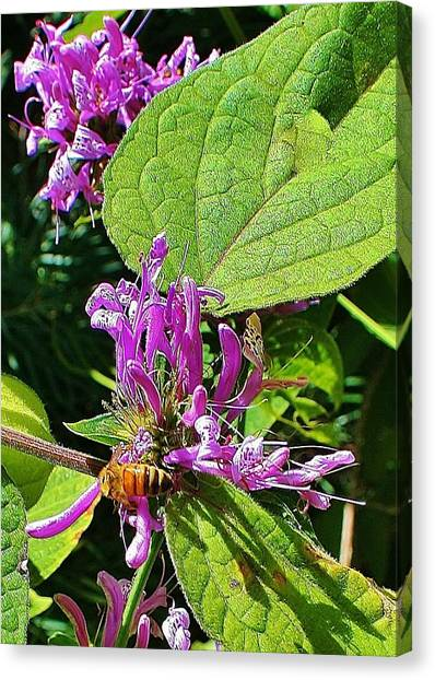Bumbling Flora Canvas Print