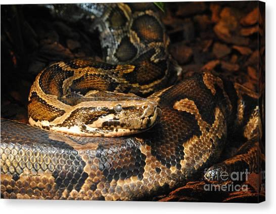 Burmese Pythons Canvas Print - Burmese Python 2 by DiDi Higginbotham