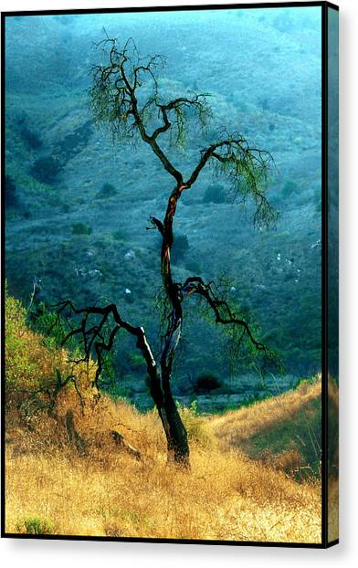 Burned Oak Tree Calabasas Canvas Print by Noah Brooks