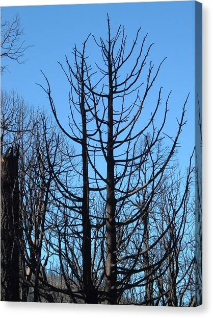 Death Valley Canvas Print - Burned Trees 2 by Naxart Studio